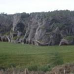 newzeland6